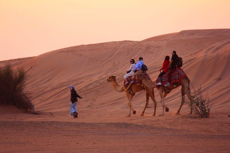 camel-3178798_1920