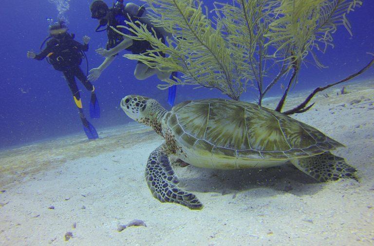 turtle-588497_1920